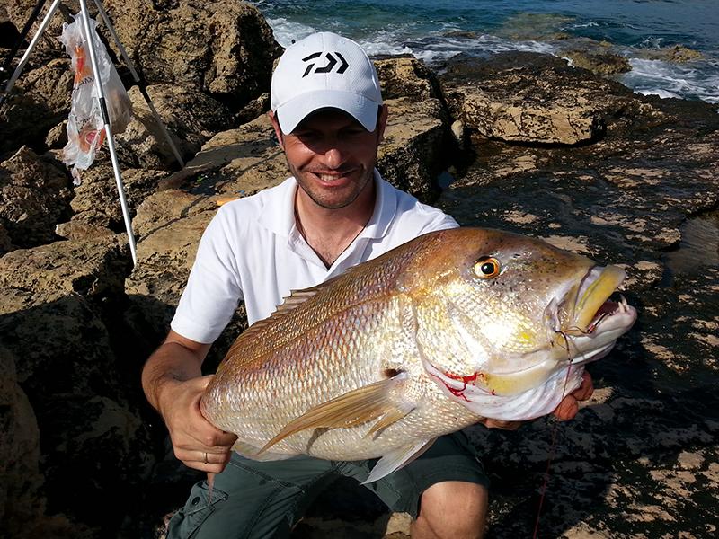 Η συναγρίδα, το άλογο της θάλασσας ή Βασίλισσα, όπως το αποκαλούσαν οι παλιοί ψαράδες (και με το δίκιο τους), θεωρείται ένα από τα πιο δυνατά ψάρια της Μεσογείου, και .....